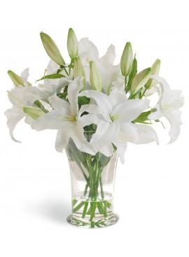 V08 White Casablanca Lily in Vase