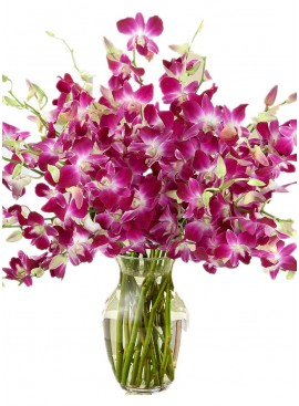 Purple Dendrobium Orchid in Vase