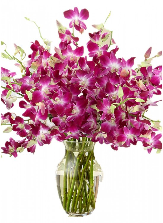 Dendrobium Orchid In Vase Sameday Flower Delivery To
