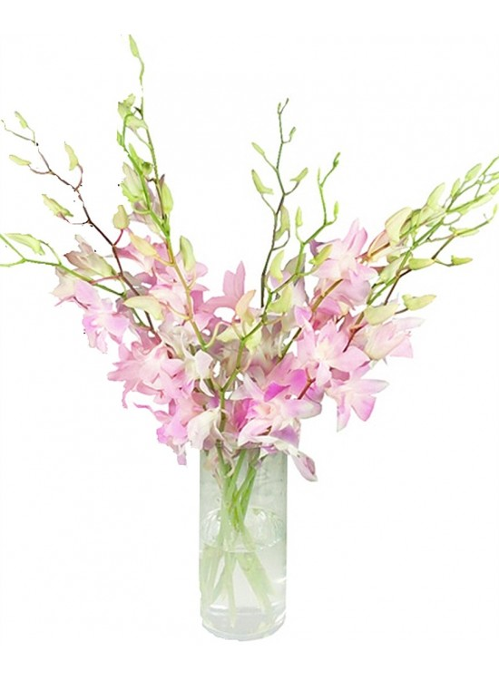 Dendrobium Orchid in Vase sameday flower delivery to ...