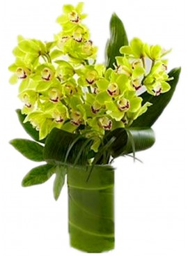 Green Cymbidium Orchid in Vase