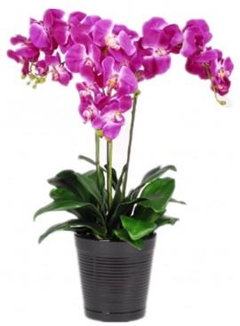 V06 Phalaenopsis Orchid in Vase