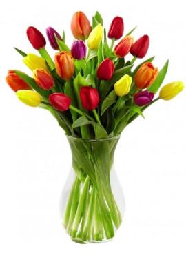 V04 Tulip in Vase