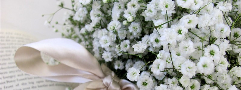 All Baby Breath Bouquets